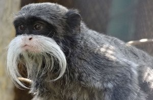 1-_titi_monkey-10-animals-with-human-like-communication-130903